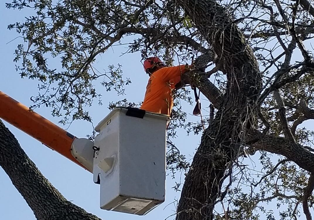 About Abor Rite Tree Service - Palm Tree Removal Tampa