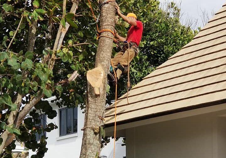 Arbor Rite Tree Service - Owner 2 Tree Removal and Trimming Services Tampa, Clearwater, St Pete, Hillsborough County
