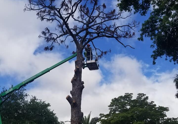 Storm Preparation Arbor Rite Tree Service - Tree Removal Tampa, Clearwater, St Pete, Hillsborough County