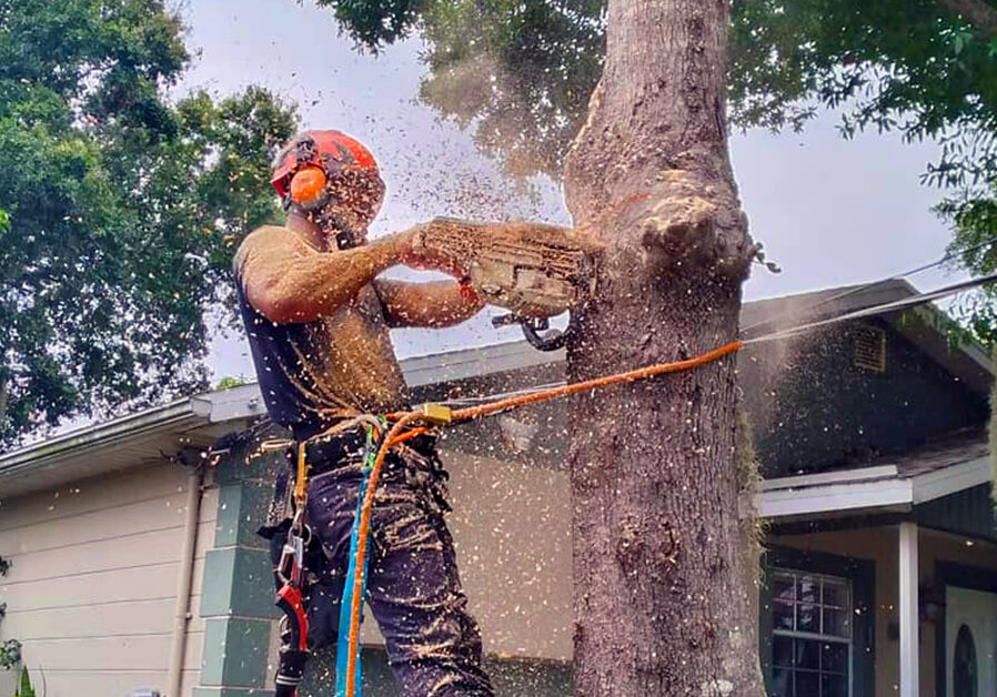 Arbor Rite Tree Service - Tree Removal and Trimming Services Tampa, FL_Banner